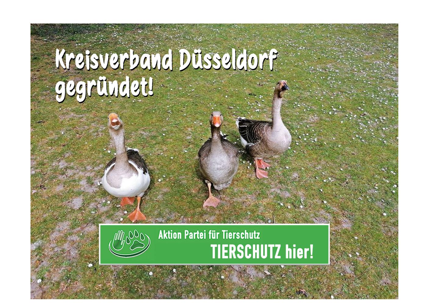 Tierschutz hier Düsseldorf