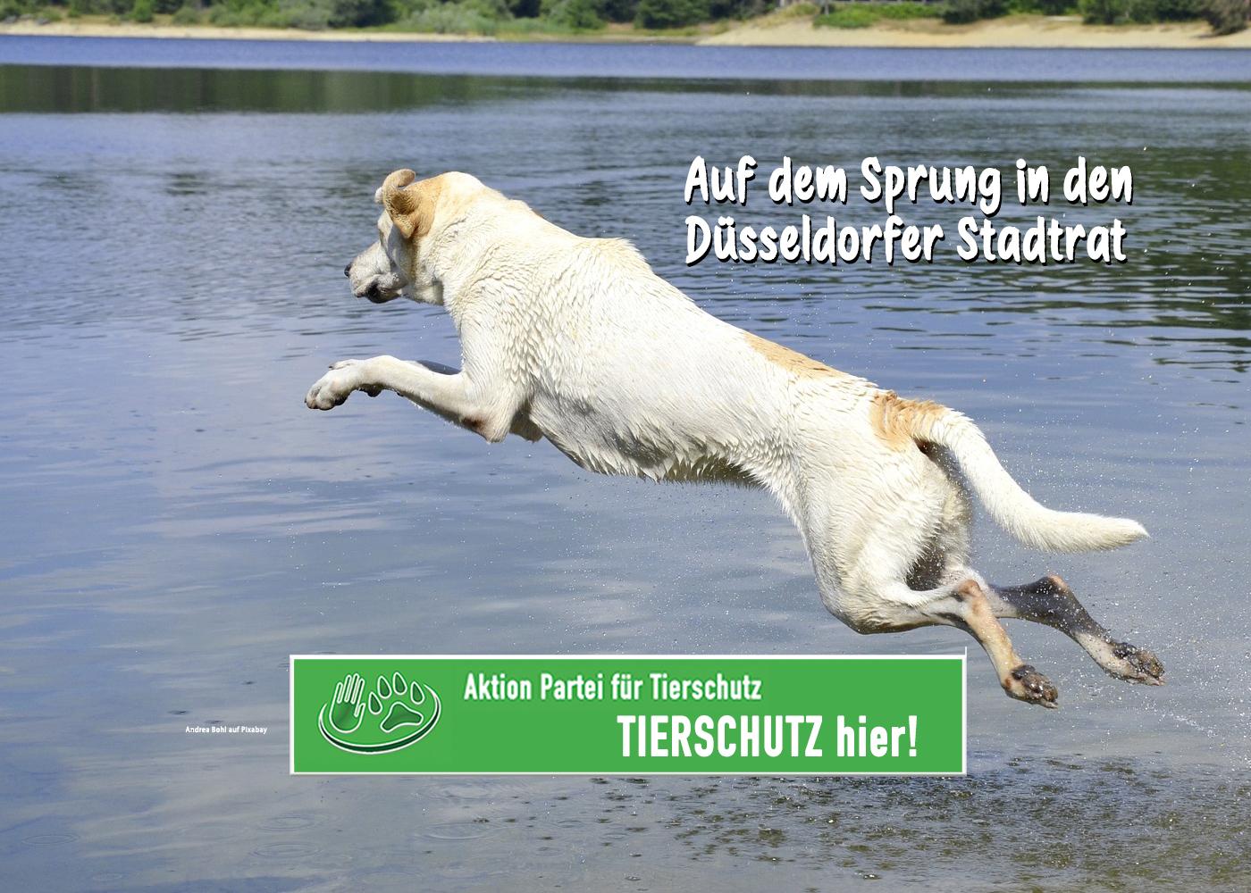 Hund auf dem Sprung